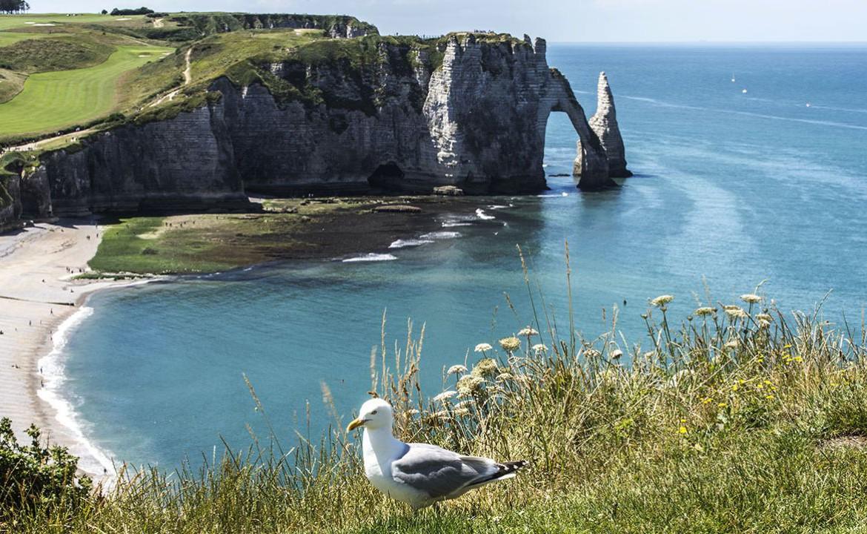 Golf-Expedition-Golf-Reizen-Frankrijk-Regio-Normandië-Dormy House-strand-meeuw
