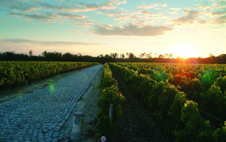 Golf-Expedition-Golf-reizen-Frankrijk-Regio-Aquitaine-Chateau-Du-Tertre-sunset-wine-fields