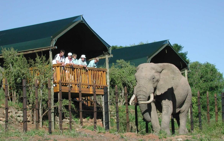 golf-expedition-golf-reis-zuid-afrika-golf-en-garden-route-elephant-national-park.jpg