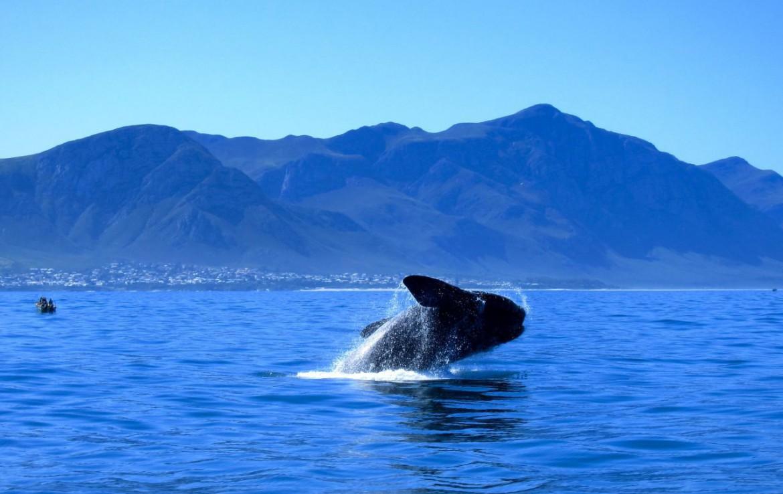 golf-expedition-golf-reis-zuid-afrika-golf-en-garden-route-walvis.jpg