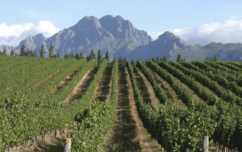 golf-expedition-golf-reis-zuid-afrika-golf-en-garden-route-wijngaard-bergen.jpg