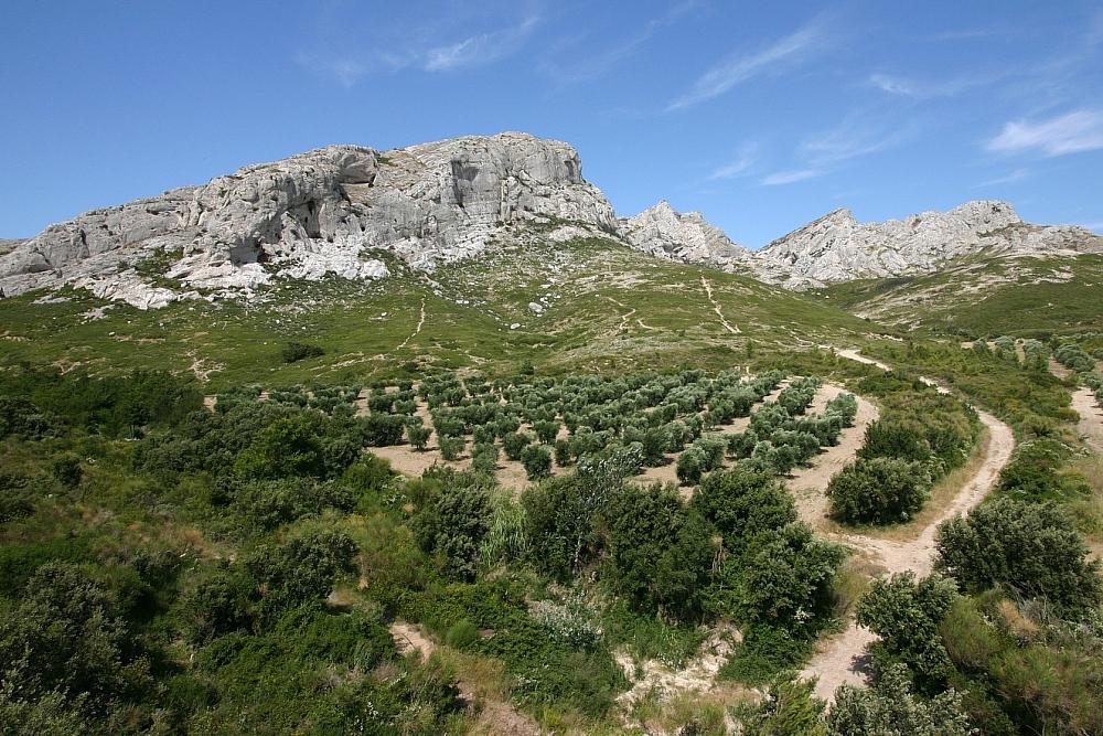 golf-expedition-golf-reizen-regio-provence-Mas-De-L'Ouilivé-wijngaard-in-omgeving