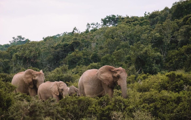 golf-expedition-golf-reizen-zuid-afrika-park-met-olifanten.jpg