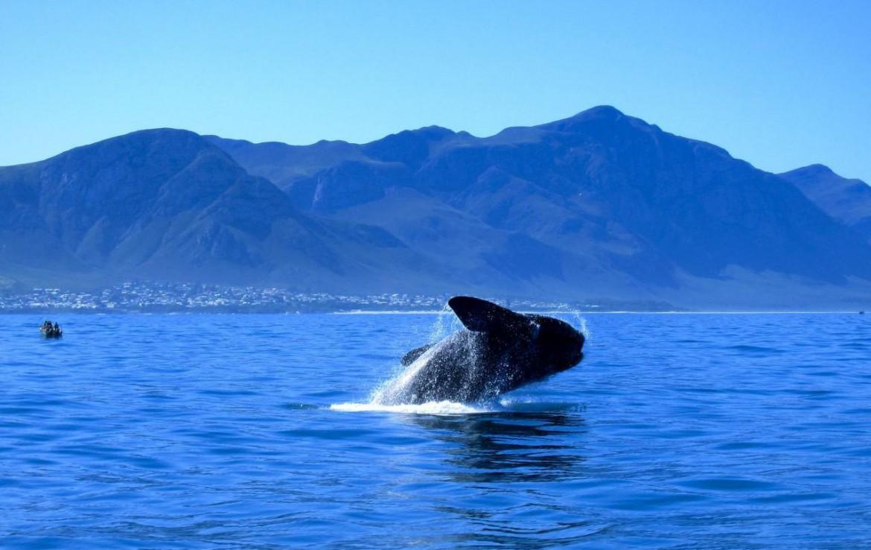 golf-expedition-golf-reizen-zuid-afrika-walvis-bergen-water.jpg